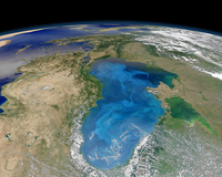 Satellite view of swirling blue phytoplankton bloom in the Black Sea.