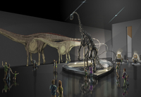 Exhibition space featuring Diplodocus longus
