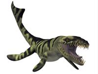 Dakosaurus, white background.