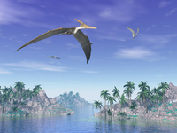 Pteranodon birds flying above islands with palm trees.