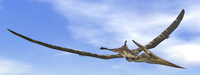 Pteranodon dinosaur flying in the blue sky.