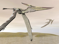 Two pteranodons flying over small islands.