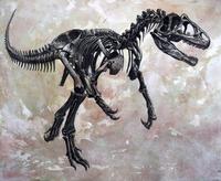 Allosaurus dinosaur skeleton.