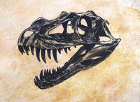 Ceratosaurus dinosaur skull.