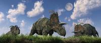 A herd of Albertaceratops grazing.