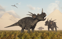 Styracosaurus dinosaurs calling out to each other.
