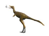 Shuvuuia dinosaur.