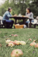 Apples on grass at orchard with couple having breakfast