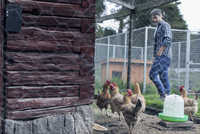 Man looking at hen at poultry farm
