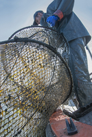 Low angle view of fisherman pulling fishing net while standing on boat