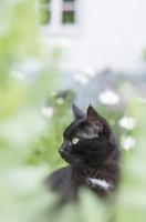 Alert black cat looking away at yard