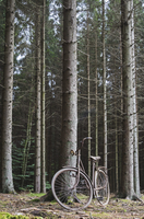 Rusty bicycle parked by tree in forest