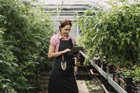 Female gardener using digital tablet in greenhouse