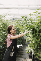 Female farmer holding digital tablet while working in greenhouse