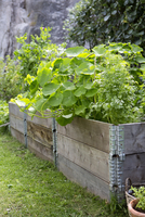 Plants growing in crates at vegetable garden