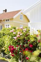 Flowering plants outside house