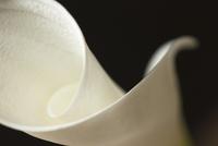 Close up of calla lily 11086002320| 写真素材・ストックフォト・画像・イラスト素材|アマナイメージズ