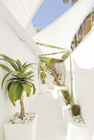 Tropical plants along modern walkway 11086007220  写真素材・ストックフォト・画像・イラスト素材 アマナイメージズ