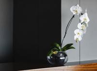 Orchids in vase on counter 11086008295| 写真素材・ストックフォト・画像・イラスト素材|アマナイメージズ