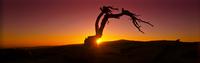 Silhouette of tree in desert landscape 11086009578| 写真素材・ストックフォト・画像・イラスト素材|アマナイメージズ