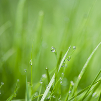Close up of water droplets on blades of grass