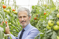 Portrait of serious scientist in greenhouse with tomatoes 11086014207| 写真素材・ストックフォト・画像・イラスト素材|アマナイメージズ