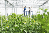 Workers adjusting sprinklers in greenhouse 11086014229| 写真素材・ストックフォト・画像・イラスト素材|アマナイメージズ