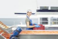 Portrait of confident worker carrying crate in food processing plant 11086014337| 写真素材・ストックフォト・画像・イラスト素材|アマナイメージズ