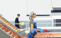 Worker carrying crate of tomatoes in food processing plant