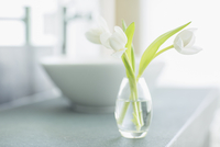 White tulips in bud vase in bathroom