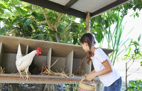 Girl with basket searching for eggs in chicken coop