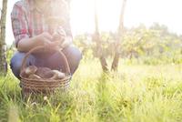 Man picking mushrooms in sunny field 11086020817| 写真素材・ストックフォト・画像・イラスト素材|アマナイメージズ