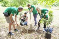 Environmentalist volunteers planting new tree 11086021231| 写真素材・ストックフォト・画像・イラスト素材|アマナイメージズ