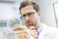 Concerned scientist examining bacteria in petri dish