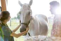 Veterinarian examining horse 11086023127| 写真素材・ストックフォト・画像・イラスト素材|アマナイメージズ