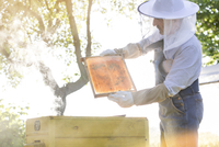 Beekeeper in protective clothing examining bees on honeycomb 11086023187| 写真素材・ストックフォト・画像・イラスト素材|アマナイメージズ