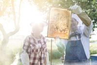 Beekeepers examining sunny bees on honeycomb