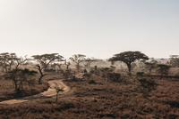 Trees and dirt road in tranquil sunny desert, Serengeti, Tanzania