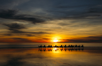 Silhouette of people riding camels at sunset, Broome, Australia