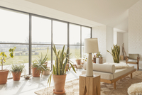 Potted plants in sunny home showcase living room
