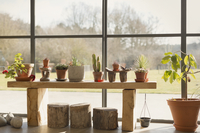 Cacti and potted plants growing in sunroom window