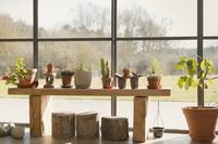 Cacti and potted plants growing in sunroom window 11086028814| 写真素材・ストックフォト・画像・イラスト素材|アマナイメージズ