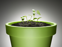 Green sprouts growing from flowerpot against gray background