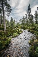 Tranquil autumn stream among trees in remote woods, Loch an Eilein, Scotland