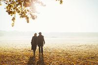 Silhouette senior couple holding hands walking in sunny autumn park 11086032778| 写真素材・ストックフォト・画像・イラスト素材|アマナイメージズ