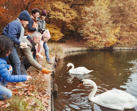 Multi-generation family feeding swans at pond in autumn park 11086032796| 写真素材・ストックフォト・画像・イラスト素材|アマナイメージズ