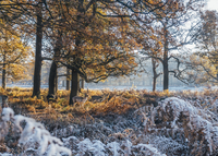 Moose among frost covered autumn woods, Richmond, London 11086034161| 写真素材・ストックフォト・画像・イラスト素材|アマナイメージズ