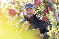 Portrait smiling male farmer with clipboard inspecting red apples in sunny orchard 11086034286| 写真素材・ストックフォト・画像・イラスト素材|アマナイメージズ