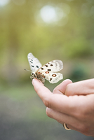 Sweden, Oland, Close up of butterfly sitting on finger