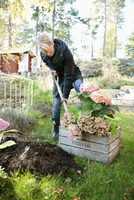 Sweden, Woman working in garden
